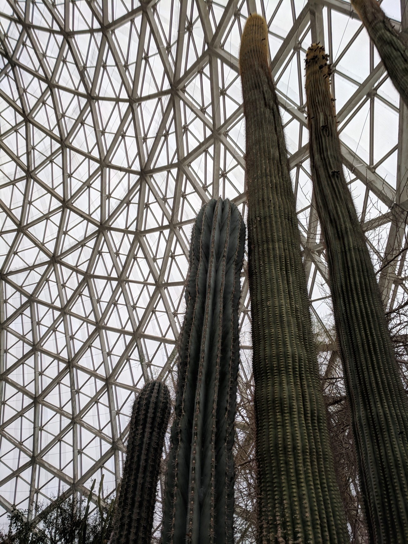 Cactus and ceiling