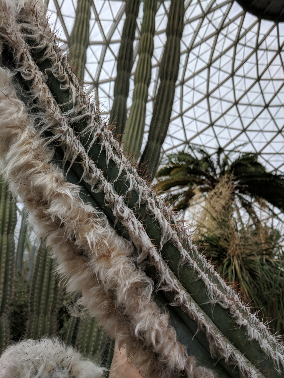 Furry cactus and ceiling