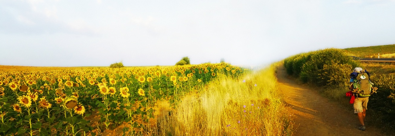 Sunflower1 -