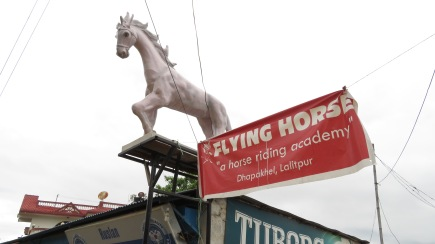 Stam_flying_horse