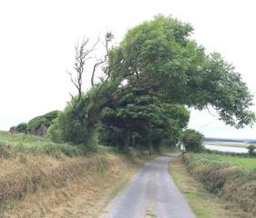 Tree+Canopy